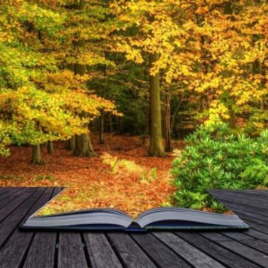 Осень (для главной страницы)